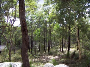 Kalamunda, Rocks and the Valley (1)